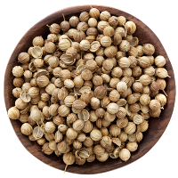 responsive-web-design-topspice-00061-coriander-seed